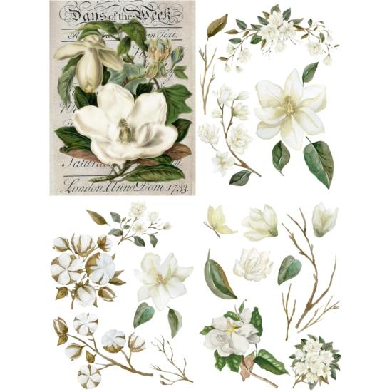 Belles and Whistles Magnolia Garden Transzfer